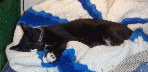 Trick sleeping