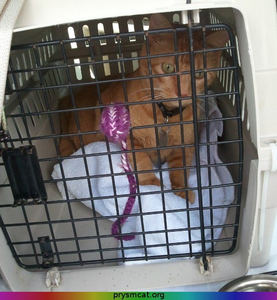 Garfield on his way home