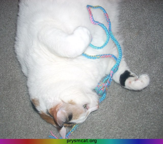 Spot with a string-toy 3