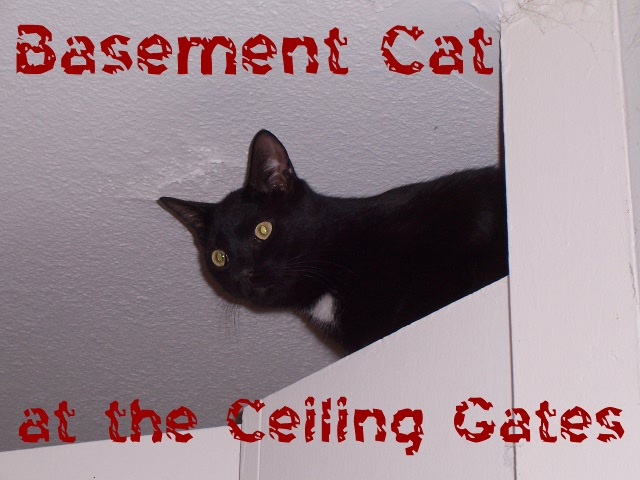 Basement Cat at the Ceiling Gates