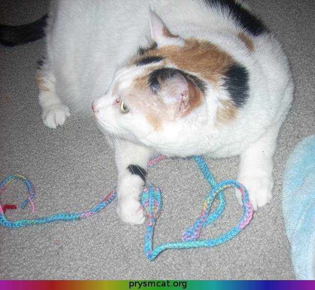 Spot with a string-toy 1
