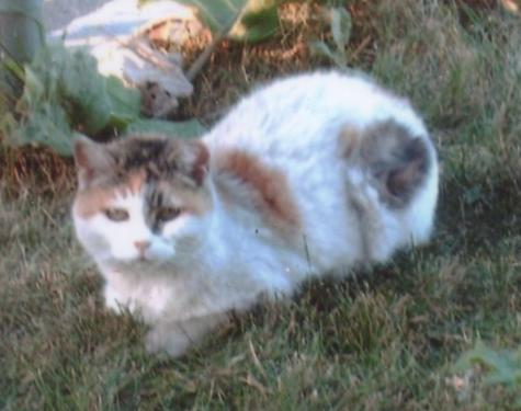 PussPuss, summer 2007